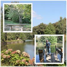 #Atatürk #Arboretumu #doğa #ağaç #göl #gölet #yeşil #çiçek #hayvan #kaz #kuğu #kaplumbağa #Bahçeköy #sarıyer #orman #işletmesi 345 #hektar #alan 1500 #aşkın #bitki #türü #Arboretumun #anlamı #ağaçev #demek #yürüyüş #spor #güneş #hava #nefesalmak #sessizlik #canlı #bitki #müzesi #floristik #zenginlik #botanikçilerin #ilgisini #çekiyor