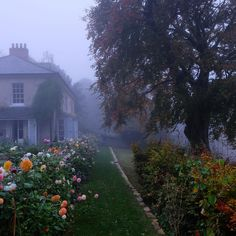 Likes, 63 Comments - Charlie McCormick (Marian Cairns. - - Likes, 63 Comments – Charlie McCormick (Marian Cairns… – – Samuel – Cairns, Nature Aesthetic, Aesthetic Vintage, Aesthetic Bedroom, Jolie Photo, Garden Cottage, Back Gardens, Pretty Pictures, Shrubs