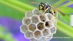 Fruchtfliegen bekämpfen und loswerden: die besten Tipps