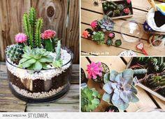 Sukkulenten In Korkstöpsel Pflanzen Und Großziehen | Pflanzen ... Sukkulenten In Korkstopsel Anlegen Eine Tolle Deko Idee