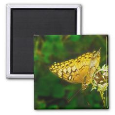 Variegated Fritillary Butterfly Photo taken in Fredericksburg Virginia. Multiple sizes are available. Great for home or office decor. Also a great gift idea for holidays, birthdays, anniversary, and house warming. Add your own text and customize it to your style.