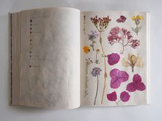 Sketch Book - I'm packing it up this weekend to send to a bookbinding competition, so I took some pictures before it goes. The insides are a journal through pressed flowers, Pressed Flower Art, Scrapbook, Nature Journal, Arte Floral, Color Swatches, Bookbinding, Botanical Art, Journal Inspiration, Inspiration Tattoos