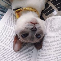 """You weren't really reading this, were you? How about now?"" —Photo and caption by @dr_tickles"