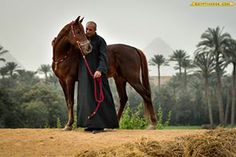 Mr. Hani Fergani with his Arabian stallion