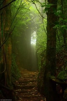 A beautiful cloud forest  | nature | | magical forests |  #nature #amazingnature  https://biopop.com/