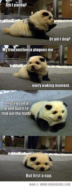 Panda or dog?