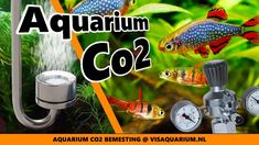 Aquarium Co2 bemesting voor planten, is dit nodig Co2 Aquarium, Fish, Pets, Youtube, Animals, Animais, Animales, Animaux, Pisces