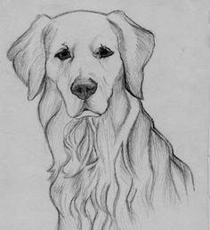 Zeichnung des golden retriever - Bleistift Drawing of the golden retriever - pencil Art Drawings Sketches Simple, Animal Sketches, Pencil Art Drawings, Easy Drawings, Drawing Art, Sketches Of Dogs, Watercolor Drawing, Drawings Of Dogs, Charcoal Drawings