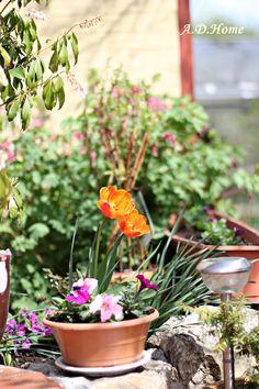 kwiaty, wiosna, ogród, dom Dom, Plants, Planters, Plant, Planting