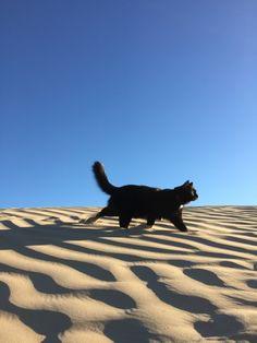 Millie in desert