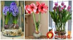 Neviete sa dočkať jari a záplavy pestrofarebných kvetov, ktoré nám budú skrášľovať záhrady? Máme pre vás dobrú správu, na obľúbené rozkvitnuté tulipány nemusíte čakať do jari a dokonca nepotrebujete ani záhradu. Vďaka jednoduchému návodu si … Ikebana, Glass Vase, Gardening, Spring, Home Decor, Garden, Lawn And Garden, Home Interior Design, Decoration Home