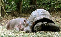 animal odd couples | Animal Lovers