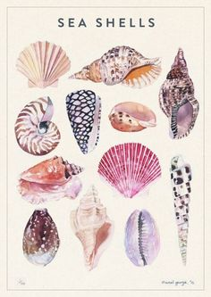 Nature - marcel george illustration The artist has used watercolour to create these shells Art And Illustration, Botanical Illustration, Nature Illustrations, Mermaid Illustration, Watercolour Illustration, Inspiration Art, Art Inspo, Art Design, Design Model