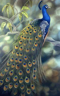 Peacock Print by Laura Regan Peacock Images, Peacock Pictures, Beautiful Artwork, Beautiful Birds, Animals Beautiful, Peacock Bird, Peacock Print, Peacock Painting, Tile Murals