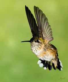 Ever since I was little, I've always had a fascination with humming birds
