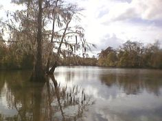 Such a peaceful place.  Bank of the West Fork of the Calcasieu River North of Lake Charles, La