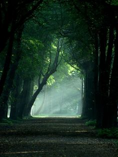 """Misty morning by T1sup 105 """"Your word is a lamp for my feet,a light on my path."""" Psalm 119:105"""