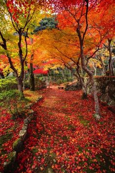 Yes, please!  Love the colors and everything about this place.    Autumn Japanese garden with maple in Kyoto, Japan