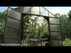Backyard aquaponics: DIY system to farm fish with vegetables - YouTube
