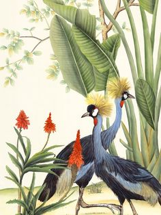 This mural is of the Far East, a land of caravans, palaces, and exotic animals. India is a wonder t Bird Illustration, Botanical Illustration, Illustrations, Mural Art, Wall Murals, Mural Painting, Exotic Pets, Exotic Animals, 3d Wallpaper