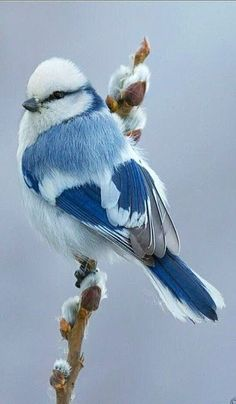 55 Unique Images Of #Birds That You Will Love!