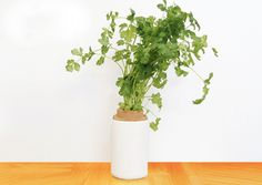 Lilo herbs, Lilo, Lilo plant growing, Lilo planter, plant apps, growing apps, plant growing, kickstarter campaign, reader submission, Lilo app, Lilo capsule, lilo capsule system