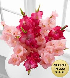 Pinking of You Gladiolus Bouquet Stems