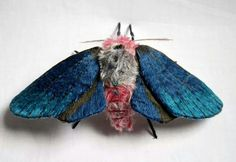 Blue winged textile moth