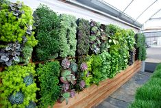 GroVert GreenHouse. great source for vertical gardens