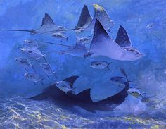 Giclee Print: Four Eagle Rays, Shark and Permit School, 2000 by Stanley Meltzoff : Fish Artwork, Eagle Ray, Animal Paintings, Sea Paintings, Painting Art, Ocean Art, Ocean Life, Underwater Photography, Wildlife Art