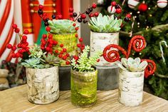 The perfect Christmas planter that can hold succlents! DIY Birch Wood Tin Can Planter by Maria Provenzano! Don't miss Home & Family weekdays at 10a/9c on Hallmark Channel!