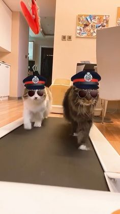 Two cat policemen on a treadmill - Funstuff - Gatos Funny Animal Memes, Cute Funny Animals, Funny Animal Pictures, Cute Baby Animals, Cat Memes, Animals And Pets, Funny Cats, Cute Dogs, I Love Cats