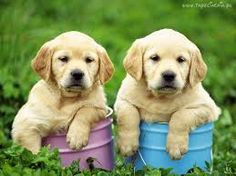 http://aboutdogbreeds.com/wp-content/uploads/2014/07/Golden-Retriever-10.jpg