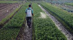 """""""Notre mode alimentaire est déterminant pour notre bien-être émotionnel, mais aussi, plus globalement, pour la santé mentale de tous, car la biologie de notre cerveau est fonction de nos apports alimentaires."""".. http://www.atlantico.fr/decryptage/salade-aux-pesticides-aller-simple-vers-anxiete-inattention-voire-demence-stephane-clerget-2917418.html#RAdAxHri9JsJtCe3.99"""