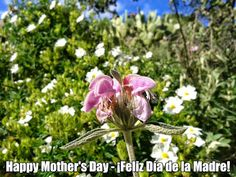 Today is Mother's Day in Spain. Celebrated every year on the first Sunday in May, the month of the Virgin Mary, this is a day dedicated to Mums of all ages.  ¡Feliz Día de la Madre! Happy Mother's Day!  Photo by Susan at www.casatagomago.com