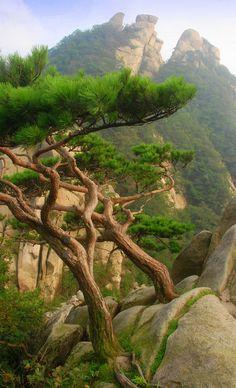 Mangyeongdae Peak with trees, Bukhansan National Park (북한산국립공원), Seoul, South Korea by Damon Tighe on Flickr.