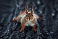 10+ Stunning Animal Portraits By Ukrainian Photographer Sergey Polyushko