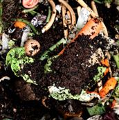 COMPOSTING START.... Brown Ingredients:  Leaves  Paper  Cardboard  Hay  Woody Prunings  Straw  Eggshells  Tea Bags  Corn Cobs  Saw Dust    Green Ingredients:  Vegetables  Fruit  Grass Clippings  Fresh Manure  Coffee Grounds  Young Hedge Trimmings  Seaweed  Feathers  Plant Cuttings  Hair