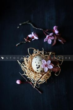 For this Easter weekend. Quai egg with cherry flowers in a nest from Rebeca Sendroiu Gilcescu.  Stockiste.com  Creative stock + Exclusivity on the GO!   Direct Link: https://www.stockiste.com/display/quai-egg-with-cherry-flowers-in-a-nest/719  #Stockiste, #StockisteCreativeStock, #Stockphoto, #Stockimages, #Photographer, #RebecaSendroiuGilcescu, #ContentMarketing, #Marketing, #Storytelling, #Creative, #Art, #Easter  Quai egg with cherry flowers in a nest © Rebeca Sendroiu Gilcescu