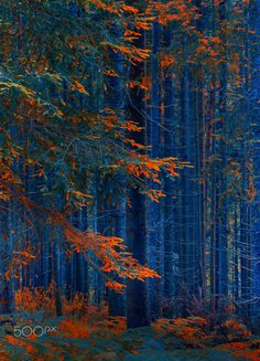 Tree in the forest - Autumn impression