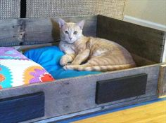 Amazing diy pallet woodbed for your cat