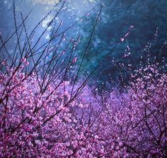 Flowers - Ekaterina Zhuravleva