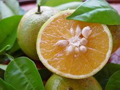 China [Citrus sinensis] - Fruit