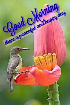 Good Morning!  Have a peaceful and happy day.