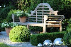Moja pierwsza hortensja w ogródku. - strona 623 - Forum ogrodnicze - Ogrodowisko