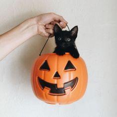 cat in a halloween pumpkin - black cat and pumpkin photo Halloween Tags, Looks Halloween, Halloween Night, Halloween Season, Halloween Makeup, Halloween Costumes, Crazy Cat Lady, Crazy Cats, Makeup Clown