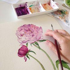 Peony watercolor on Behance