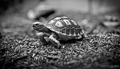 Image result for black and white turtle