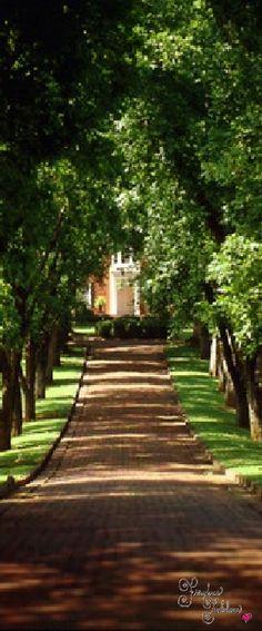 Frivolous Fabulous - Sweet Romantic Southern Charm @michaelsusanno Your and mini-mes road to heaven.