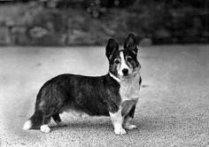 This Photo was uploaded by Pietoro Cardigan Welsh Corgi, English Sheepdog, Pembroke Welsh Corgi, Canvas Prints, Art Prints, Mans Best Friend, Cute Dogs, Poster Prints, Corgi Dog